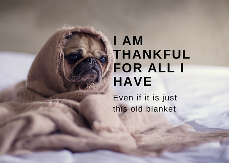 I am Thankful | Annette Frei | 360 Web Designs